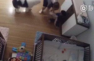 婴儿滚下床柜瞬间 9岁哥哥闪电出手接住