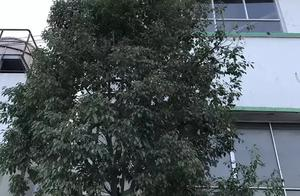 步步惊心!惠阳一19岁女护士为救人徒手爬上15米高铁梯