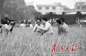 双季超级稻产量世界纪录诞生 年亩产1537公斤