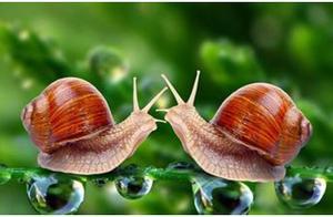 """蜗牛居然是""""蛋生""""的,密集恐惧症者慎入"""