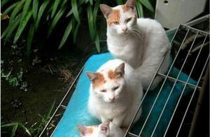 2016年最有趣的16则猫咪推特 笑笑朕就赏赐你一天有好开始