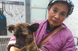 68岁老人收养200多只流浪猫狗 天越来越冷需爱心人士帮助