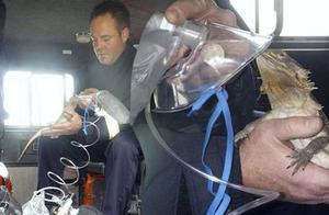 英消防员火灾中救出宠物蜥蜴 用面罩为其输氧