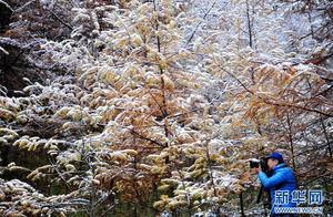 神农架景区降秋雪 高山之上白雪皑皑