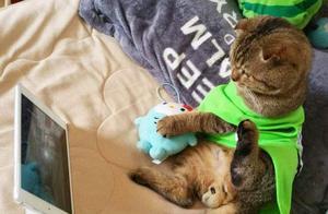 这只猫不想成精都难 网瘾少年or追剧狂哪个才是真正的喵星人?