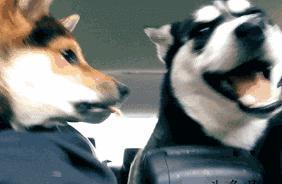 见过狗狗生气吵架吗?简直萌死了!