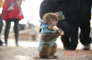 生态观光园举行动物新春运动会 现场萌萌哒