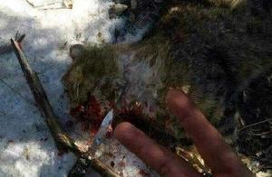 男子自称虐猫两年多 网上发布血腥照片引网友愤怒