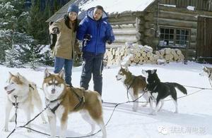 萌犬丨北美最受欢迎的十部狗狗电影