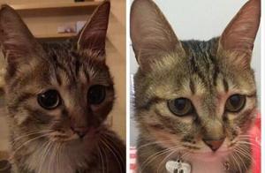 收养一只流浪猫是什么体验?都来说说吧,网友评论都充满了爱