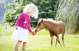 世界上最小的马?大小跟狗狗似的,这只小马刷新了最小微型马纪录,养一只给孩子们玩?