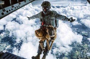 真会玩!哥伦比亚空降兵4000米高度带着狗狗去跳伞