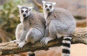 五一去哪玩 温州动物园请你给动物宝宝取名