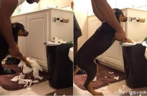 汪星人趁主人不在乱咬卫生纸,帅气暖男牵狗狗前腿一起收垃圾