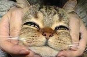 讲真,谈恋爱不如养只猫……