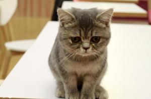 猫咪竟如此玩电梯,笑死我了