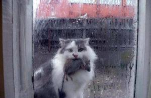 猫咪抓大堆老鼠回家,虽然你不喜欢,但是它已经给你最好的了