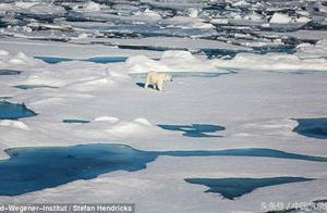 北极海冰比去年有所恢复!但这不是好消息,而是大灾难的开始!