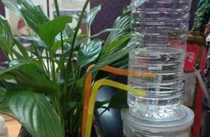 自制自动花卉浇水器,十一去的在再远都不用担心花会干!