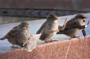 """""""给鸟加上人手"""",,毫无违和感,,"""