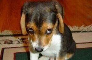 狗狗明明是在生气,表情却意外地讨喜,让人哭笑不得!