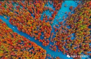皖南318旁的方塘红杉林,被称为水上喀纳斯,11月底红遍全国!