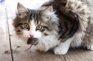 猫咪那么可爱,为什么还会有人害怕它?