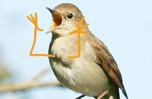 小鸟被外国网友玩儿坏了,当它们被加上小手后画面简直不要太喜感