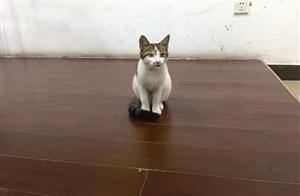 """是赶是留?宁波五乡中学一群呆萌""""校猫""""引发大讨论"""