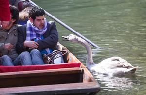 他把刚救起的天鹅拥入怀里准备治疗时,天鹅下一秒的回应超意外!