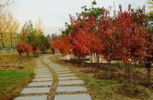 爱在深秋叶红时「周末去哪儿」