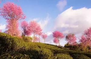"""冬天,来一场""""赏花"""",宛若仙境,浪漫至极"""
