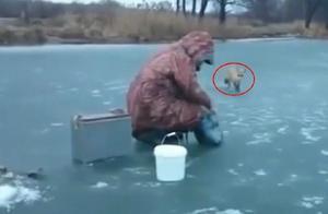 冰天雪地,小狐狸饥肠辘辘,壮胆从树林走出,向钓鱼人讨食