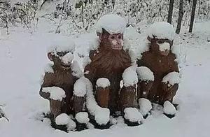 一张图带你了解雪花到底有多重!