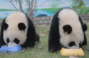 上海野生动物园带你感受与众不同的冬天