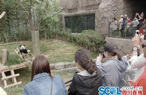 大熊猫全球艺术巡展在韩开幕 影像作品看《都江堰》