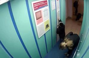 牵绳被电梯门夹住,狗狗被吊上天花板惊恐挣扎差点勒死!