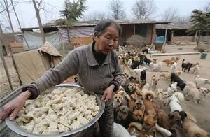 5个人用了6年,收留并照顾了超过1300只流浪狗!