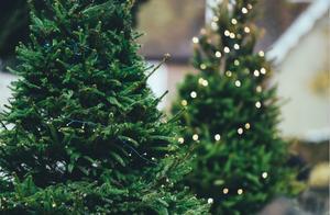 """圣诞节过后你家""""下岗""""的圣诞树处理了吗?处理不当将面临罚款"""