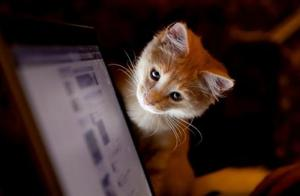 家里的猫为什么喜欢霸占电脑?