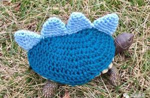 这么冷的天,小乌龟也要穿毛衣哦