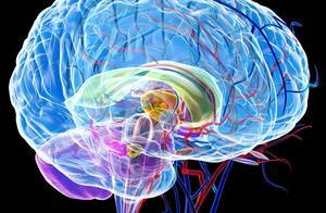 人的大脑还有潜能可以开发吗?