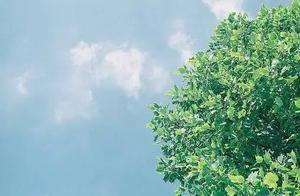 天气| 本周天津的天气又调皮了 将迎三次雨 温差超20℃
