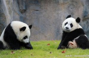 冬日游上海野生动物园是不错的选择