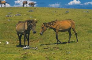 世界上最小的马,它仅长53厘米,高61厘米!
