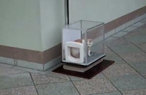 喵星人进化中,猫咪搭电梯超熟练!