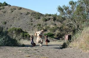超有趣!15张照片完美定格史上最庞大的狗