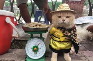 皇上驾到:猫咪穿皇服卖鱼!原来它是越南最萌小贩