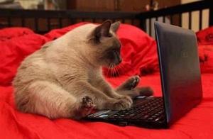 19个会使用电脑的猫,奇葩呀!