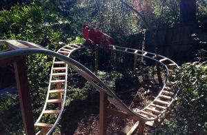 为实现儿子梦想 美国男子在后院修建55米长过山车